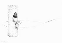 PSA 6 - graphite on paper - 8,5 x 11 inches