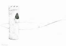 PSA 9 - graphite on paper - 8,5 x 11 inches