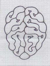 Brain Sketch from photo